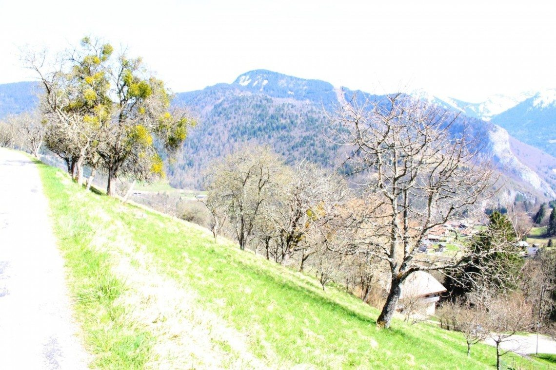 LE CRÊT land with trees