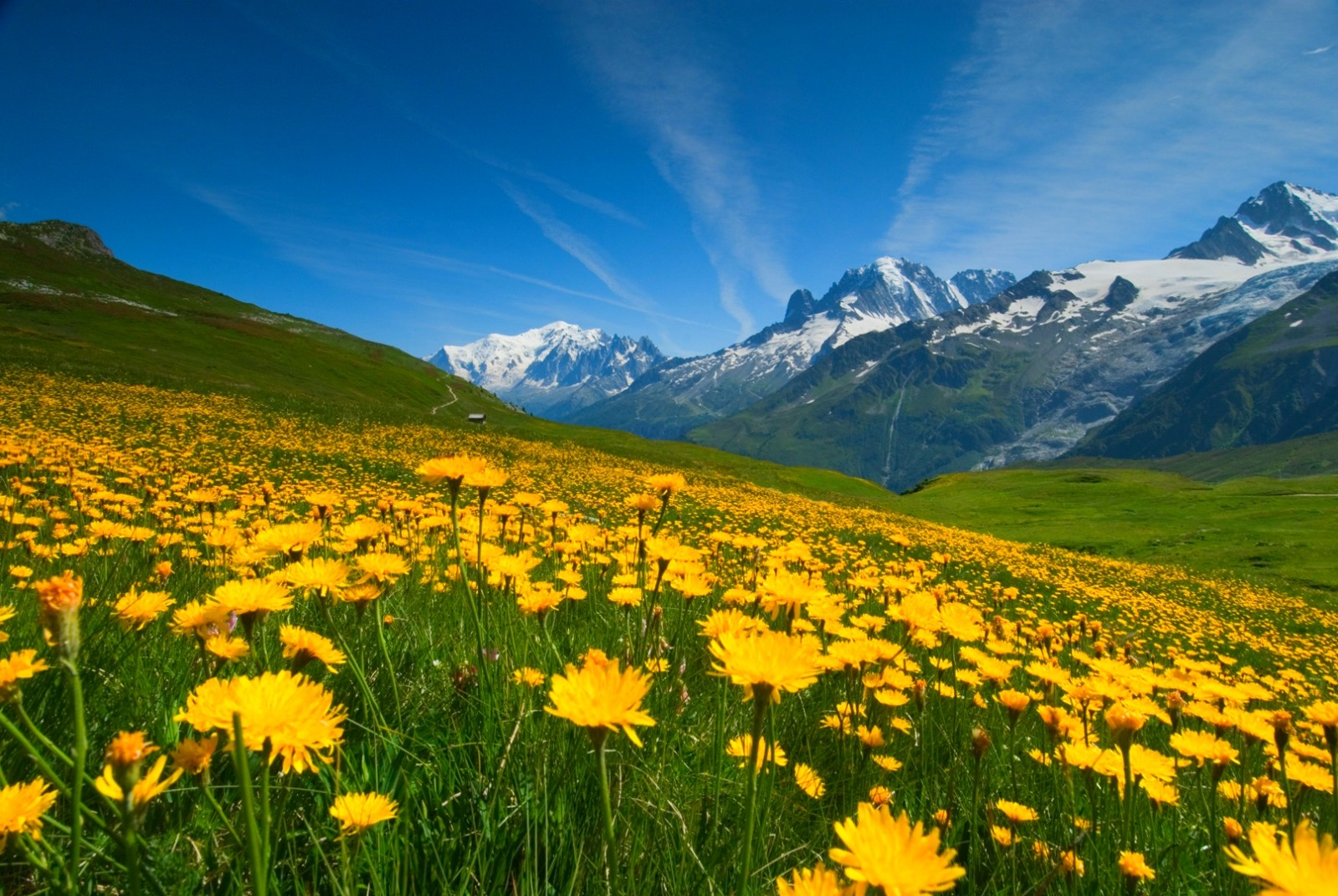 mountain flowers in the spring